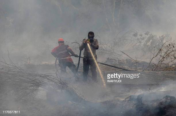 Indonesian firefighters battle a forest fire one of many spewing toxic haze across the region causing an increase in reports of respiratory illnesses...