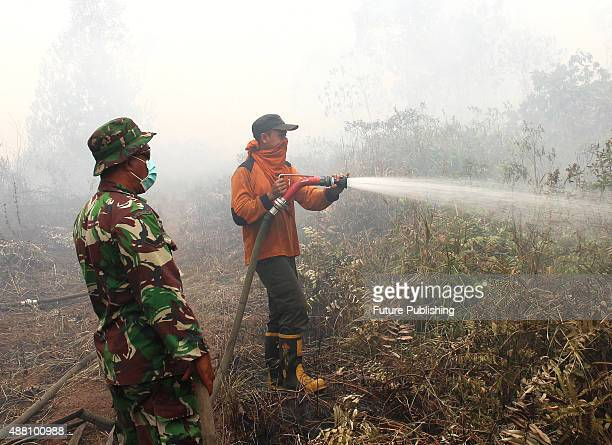 Indonesian firemen try to extinguish forest fire on September 13 2015 in Riau Indonesia The thick haze has forced the repeated cancellation of...