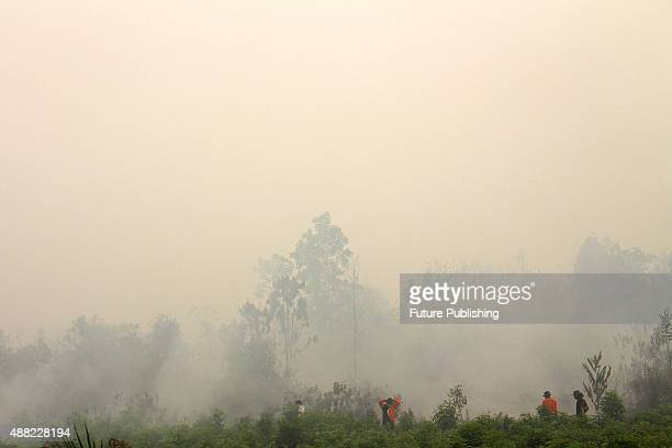 Indonesian firemen try to extinguish wild fire at Kampar District on September 14 2015 in Riau province Indonesia The thick haze has forced the...