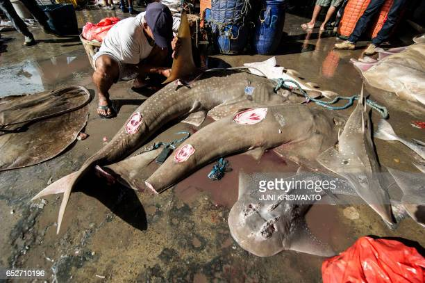 Indonesian fishermen process their catch which include sharks at a fishing village in Brondong East Java on March 13 2017 Indonesia the world's...