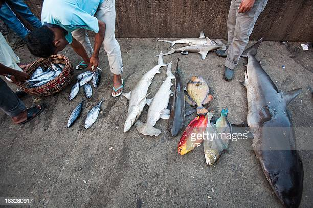 Indonesian fishermen unload various catch of fish that includes sharks and baby sharks in Lampulo fish market in Banda Aceh in Aceh province on March...