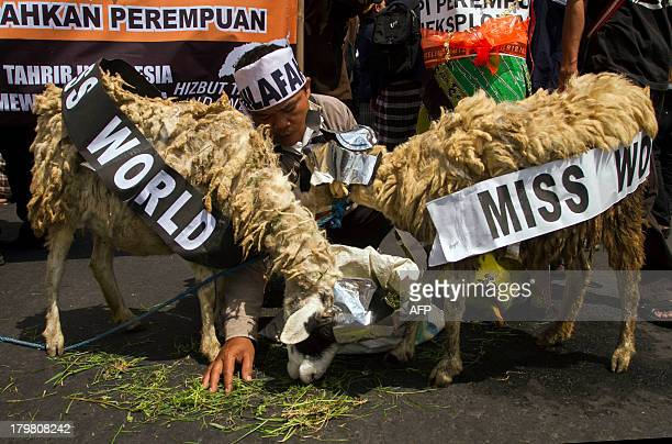 Indonesian Muslims dressed two goats to symbolize Miss World beauty pageant during a rally in Yogyakarta on September 7 2013 The past week has seen...
