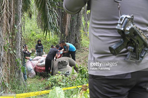 Indonesian officials conduct an autopsy on a fiveyearold elephant that was found dead at a palm oil plantation on April 18 2016 in East Aceh...