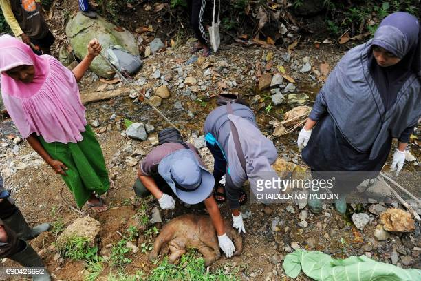 Indonesian officials from the Nature and Conservation Agency and villagers examine the carcass of a baby elephant born premature at Tangse village in...