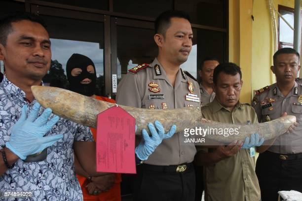 Indonesian police display a pair of elephant tusks recovered from a recent raid in Aceh Tamiang on November 16 2017 Police on November 16 arrested...
