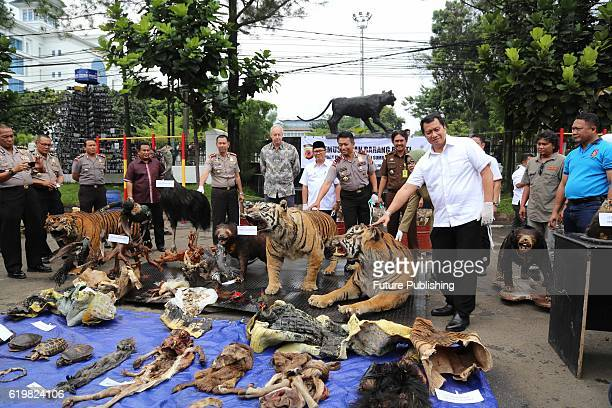 Indonesian police officers set fire a stockpile of Stuffed Sumatran tigers, two Sun Bear, five bird of paradise, two peafowl, two-tailed Eagles...