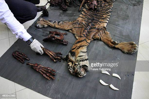 Indonesian Police shows the bones and skin of the dead Sumatran tiger illegally killed by poachers on August 10 2015 in Aceh Indonesia Indonesian...