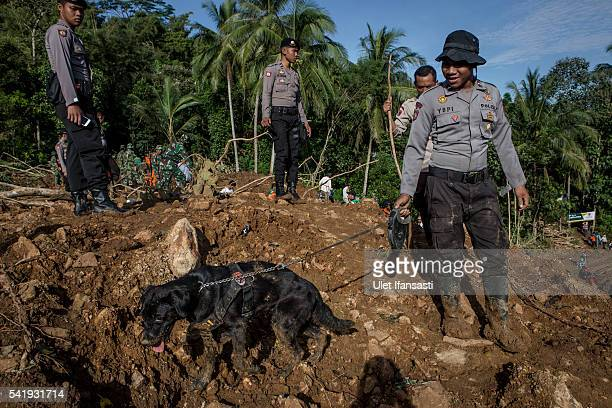 Indonesian police with his dog search for victims after a landslide at Caok village on June 21 2016 in Purworejo Indonesia At least 47 people were...