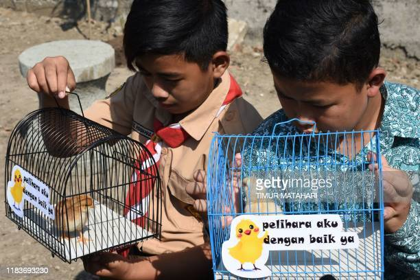 Indonesian pupils look at chicks in cages with signs that read please take good care of me given to them by local officials as part of a programme to...