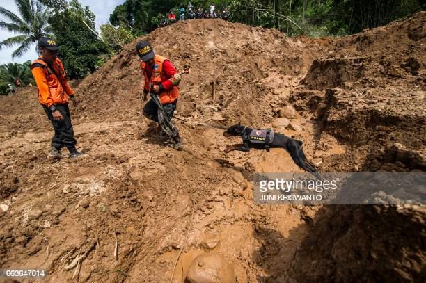 Indonesian rescuers use a sniffer dog to search for survivors after a wall of mud slammed onto houses from a hillside after heavy rainfall in...