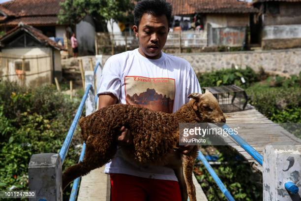 A Indonesian shepherds carries a sheep for bathing in a stream at his farms at Mekar Jaya village in Garut West Java Indonesia on Friday August 3 2018