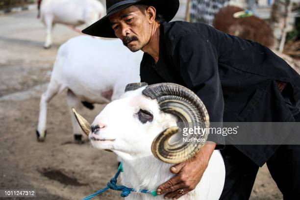 A Indonesian shepherds holds a sheep during a care at his farms at Mekar Jaya village in Garut West Java Indonesia on Friday August 3 2018