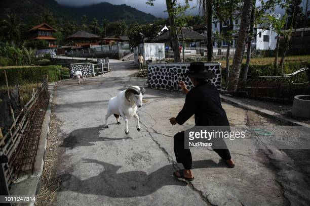 A Indonesian shepherds with a sheep during a care at his farms at Mekar Jaya village in Garut West Java Indonesia on Friday August 3 2018