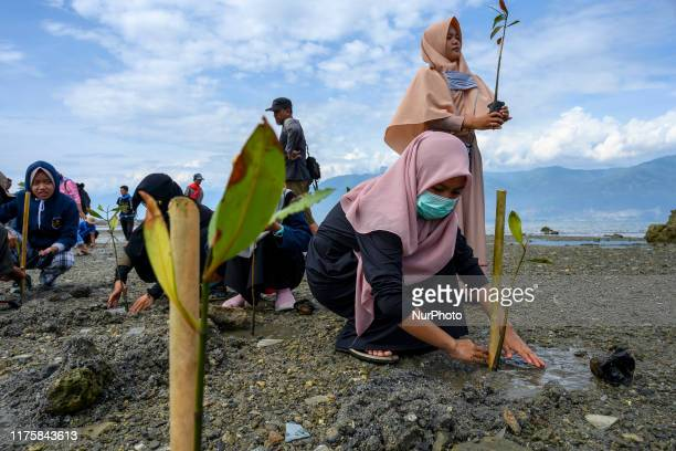 Indonesian Volunteer Community activists and mangrove lovers planted mangrove seedlings on the coast of the former tsunami impact, Palu Bay, Central...