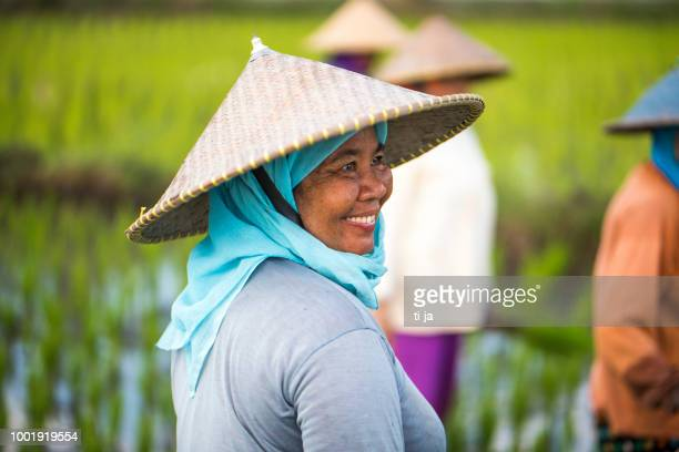 indonesian women on the rice field - indonesia stock pictures, royalty-free photos & images