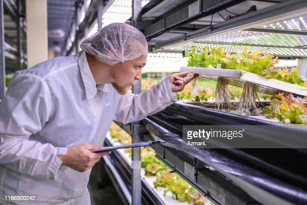 レタス作物の根構造を研究する屋内ag研究者 - 持続可能な開発目標 ストックフォトと画像