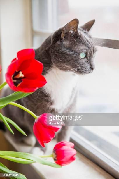 Indoor Cat Gazing Out Window