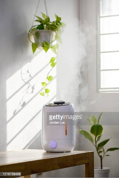 indoor garden - humidifier stock pictures, royalty-free photos & images