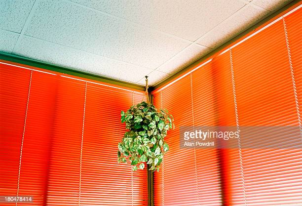 indoor hanging basket and red blinds - hanging basket stock pictures, royalty-free photos & images