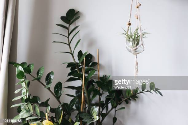 indoor plants - hanging basket stock pictures, royalty-free photos & images