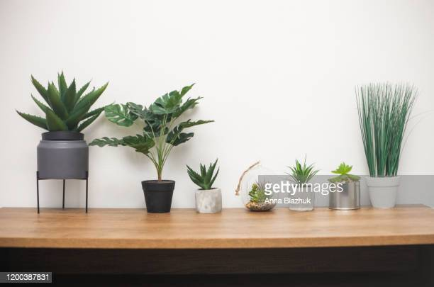 indoor plants, succulent, cactus, monstera on wooden table against white wall - 机 木 ストックフォトと画像
