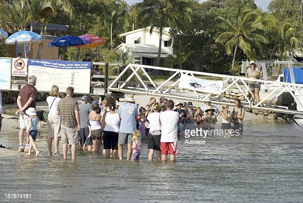 Indo-Pacific humpback dolphin , Tourists and residents gather every morning for the chance to interact with the local dolphin population, which has...