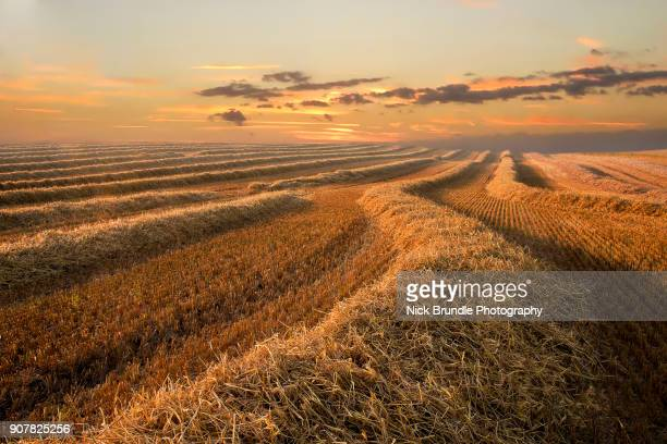 industrial agriculture - rye grain stock pictures, royalty-free photos & images