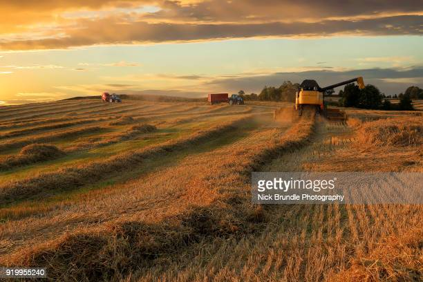 industrial agriculture - grain harvest stock pictures, royalty-free photos & images