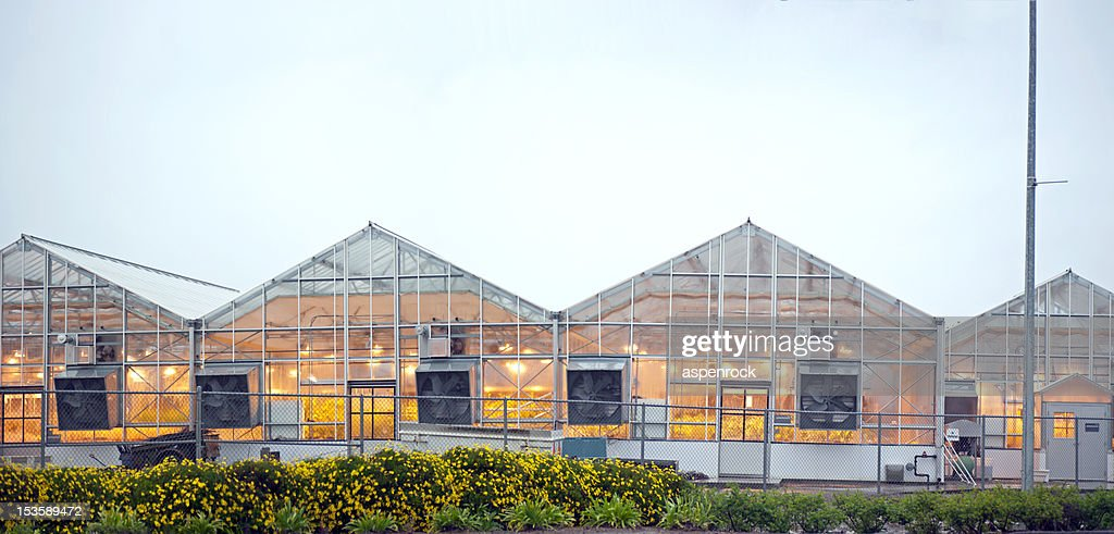 industrial greenhouses in the rain : Stock Photo