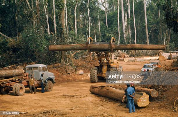 Industry Timber workers watching large log being carried away