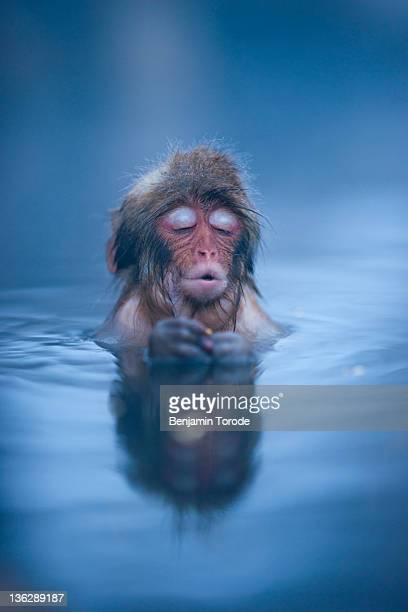 infant japanese snow monkey - hot spring stock pictures, royalty-free photos & images