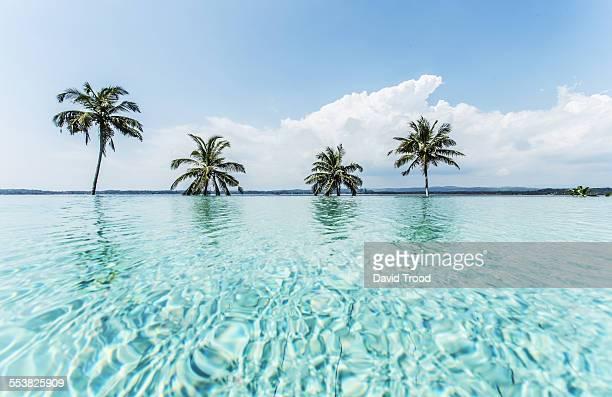 Infinity pool at a hotel in Sri Lanka