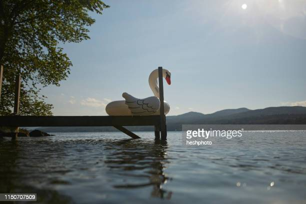 inflatable swan on dock - heshphoto stock pictures, royalty-free photos & images