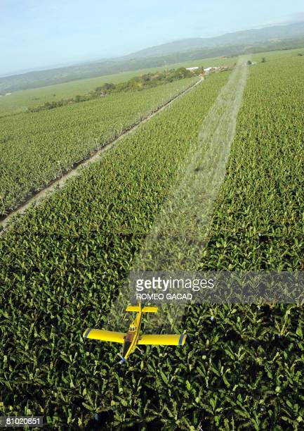 InflationpovertyfoodPhilippinesagriculturereformFEATURE by Cecil Morella A crop duster plane sprays fungicide to protect the 7000 hectare banana...