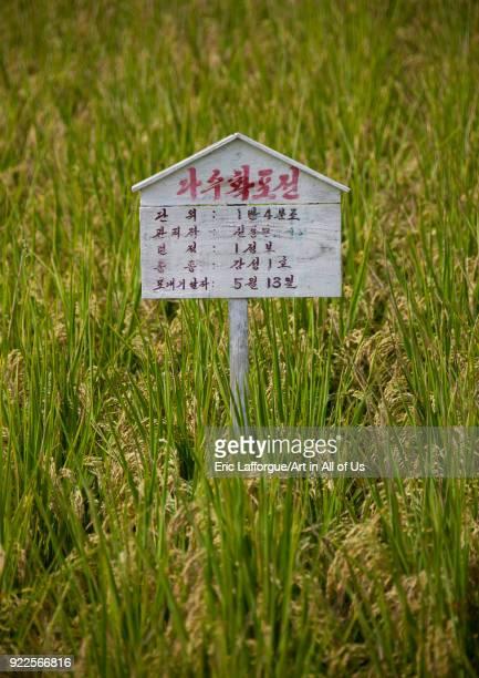 Information sign among field of crops South Pyongan Province Chongsanri Cooperative Farm North Korea on September 12 2011 in Chongsanri Cooperative...