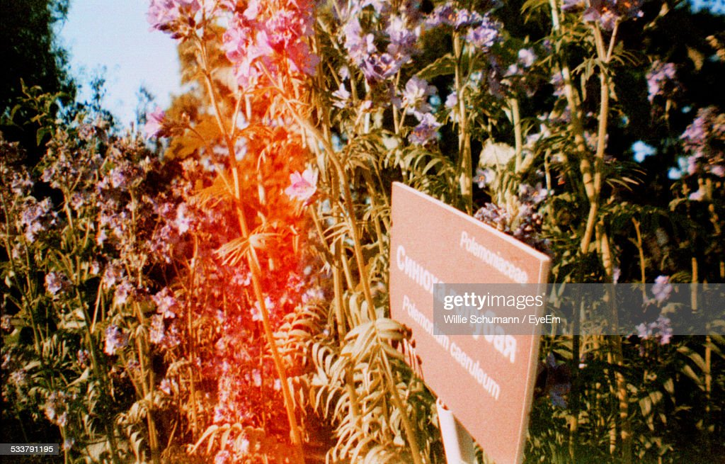 Informational Sign In Flowers : Foto stock