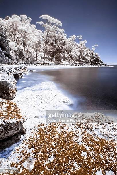 Infrared | Boronia Reserve | Tasmania