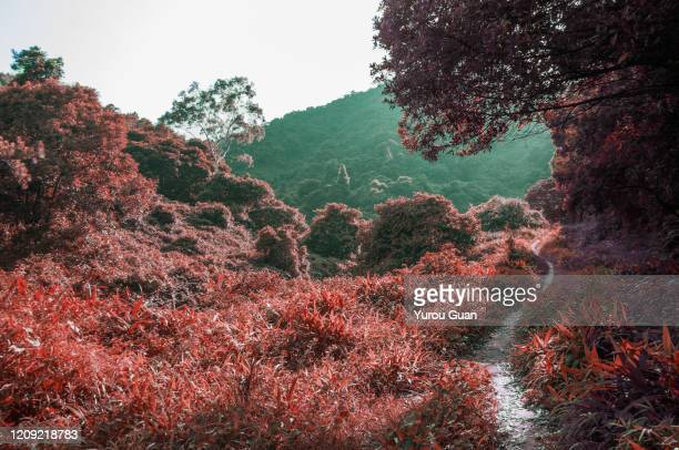 infrared photography: dirt road in the mountain with grass around the road, jiangmen, guangdong, china. - infrarosso foto e immagini stock