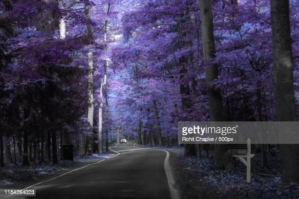 infrared tunnel of trees - infrarosso foto e immagini stock