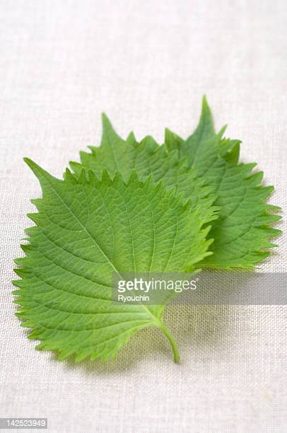 ingredient, - shiso stock pictures, royalty-free photos & images