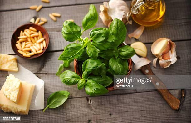 Ingredients of basil pesto