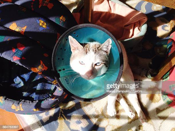 Injured Cat Sitting On Carpet With Medical Cone
