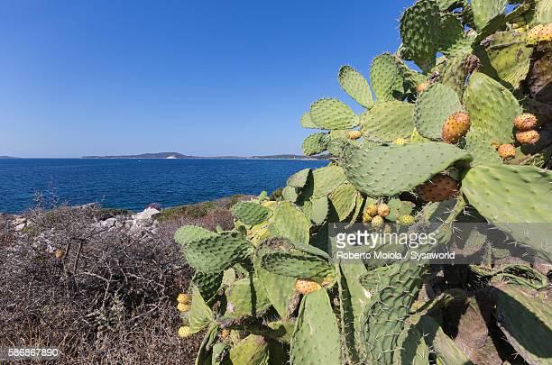 Inland frame the blue sea Villasimius Sardinia