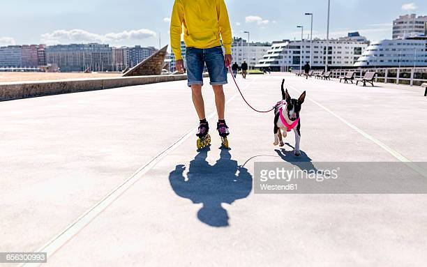 inline-skater going walkies with his bull terrier - inline skating stock pictures, royalty-free photos & images