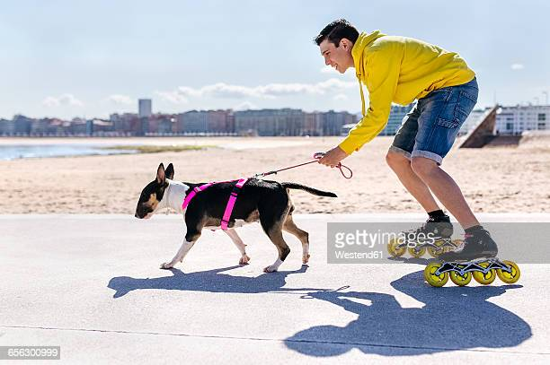 inline-skater with his bull terrier - inline skate stock photos and pictures