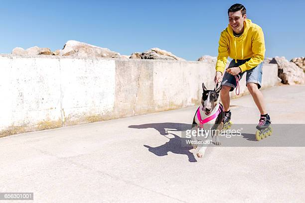 inline-skater with his bull terrier - inline skating stock pictures, royalty-free photos & images