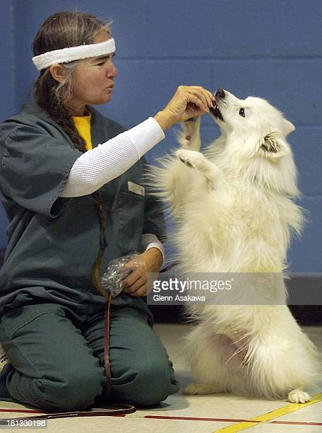 Inmate Mary Johnson feeds a treat to Max an American Eskimo dog during a training session at the Colorado Women's prison in Canon City Female inmates...