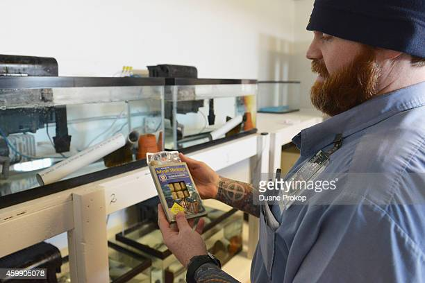 Inmate Robert Cooper feeds hellbender salamanders that are part of Green Initiative at Marion Correctional Institution on December 3 2014 in Marion...