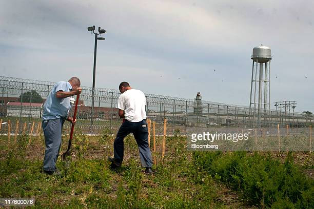 Inmates work in a garden at the North Central Correctional Institution in Marion Ohio US on Wednesday June 15 2011 As Ohio tries to close an $8...