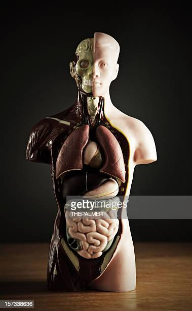 inner beauty - organ donation stock photos and pictures